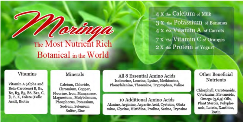 moringa-nutrient-rich